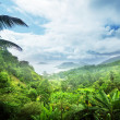 Stock Photo: Jungle of seychelles island