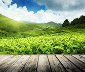 Wood floor on tea plantation Cameron highlands, Malaysia — Stock Photo