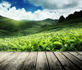 Wood floor on tea plantation Cameron highlands, Malaysia — Stock Photo