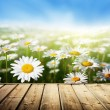 Field of daisy flowers and wood floor — Foto de Stock
