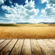 Stock Photo: Wood platform and barley hills Tuscany, Italy