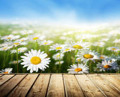 Field of daisy flowers and wood floor — Stock Photo