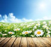 Daisy blommor och trägolv — Stockfoto
