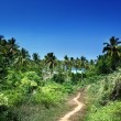Way to beach in jungle, Phi-Phi island, Thailand — Stock Photo