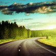 Asphalt road in forest — Stock Photo