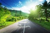Empty road in jungle of Seychelles islands — Stock Photo