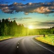 Asphalt road in forest — Stockfoto