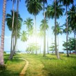 Palms on beach of Phi Phi island, Thailand — Stock Photo