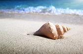 Seashell on the beach (shallow DOF) — Stock Photo