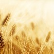 Wheat field — Stock Photo #39528649