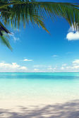 Caribbean sea and coconut palms — Photo