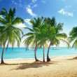 Beach of Catalina island in Dominican republic — Stock Photo #40914467