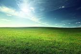 领域的弹簧草 — 图库照片