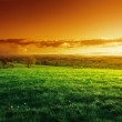 Field of spring grass in sunset time — Stock Photo #41396763
