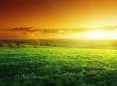 Pole jarní trávy v čas západu slunce — Stock fotografie