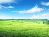 Hills in sunny day Tuscany, Italy  — Stock Photo