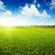Field of spring flowers and perfect sky — Stock Photo #4493021