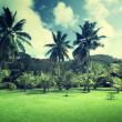 Field of grass and coconut palms on Praslin island, Seychelles — Stock Photo #45360677