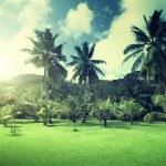 campo de césped y Palmas de coco en la isla de praslin, seychelles — Foto de Stock