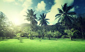 Field of grass and coconut palms on Praslin island, Seychelles — Stock Photo