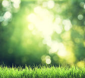 Green grass in sunny forest — Stock Photo