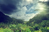 Jungle of seychelles island  — Stock Photo