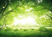 Slunečný den v letním parku — Stock fotografie