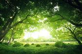 Dia ensolarado no parque de verão — Fotografia Stock