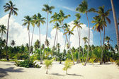 Palms in Dominican — Stock Photo