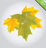 Vector autumn leaves yellow and green color — Stock Vector