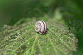 Snail on green plant leaf — Stock Photo