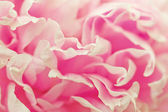 Vintage flower (peony) — Stock Photo
