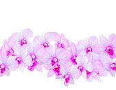 Flowers Orchids — Stock Photo