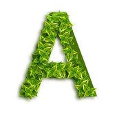 Carta um com folhas — Foto Stock