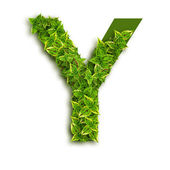 Letter Y, With Leaves — Stock Photo