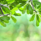 Green leafs. — Stock Photo