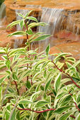 Green Leaves With A Waterfall Smaller — Stock Photo