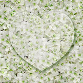 Heart on white flowers background — Foto Stock