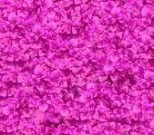 Flower purple blooming of bougainvilleas — Foto de Stock