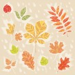 Autumn leaves collection set — Stock Vector