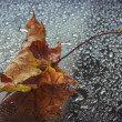 Wet autumn leaf — Stock Photo