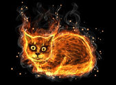 Fire cat — Stock Photo