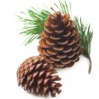Pine cones on a white background — Photo