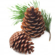 Pine cones on a white background — Foto de Stock