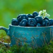 Blueberries in a blue cup - Stock Photo