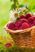 Ripe raspberries — 图库照片