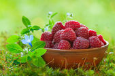 Ripe raspberries in a clay bowl — Stock Photo