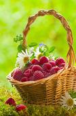 Ripe raspberries in the basket — Stock Photo