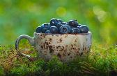 Bleuets dans une tasse sur la mousse — Photo