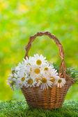 Basket with daisies on grass — Stock Photo